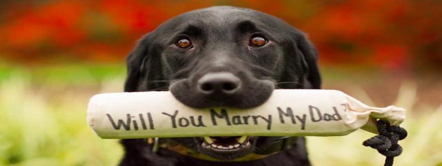 Pedido Casamento Cachorros